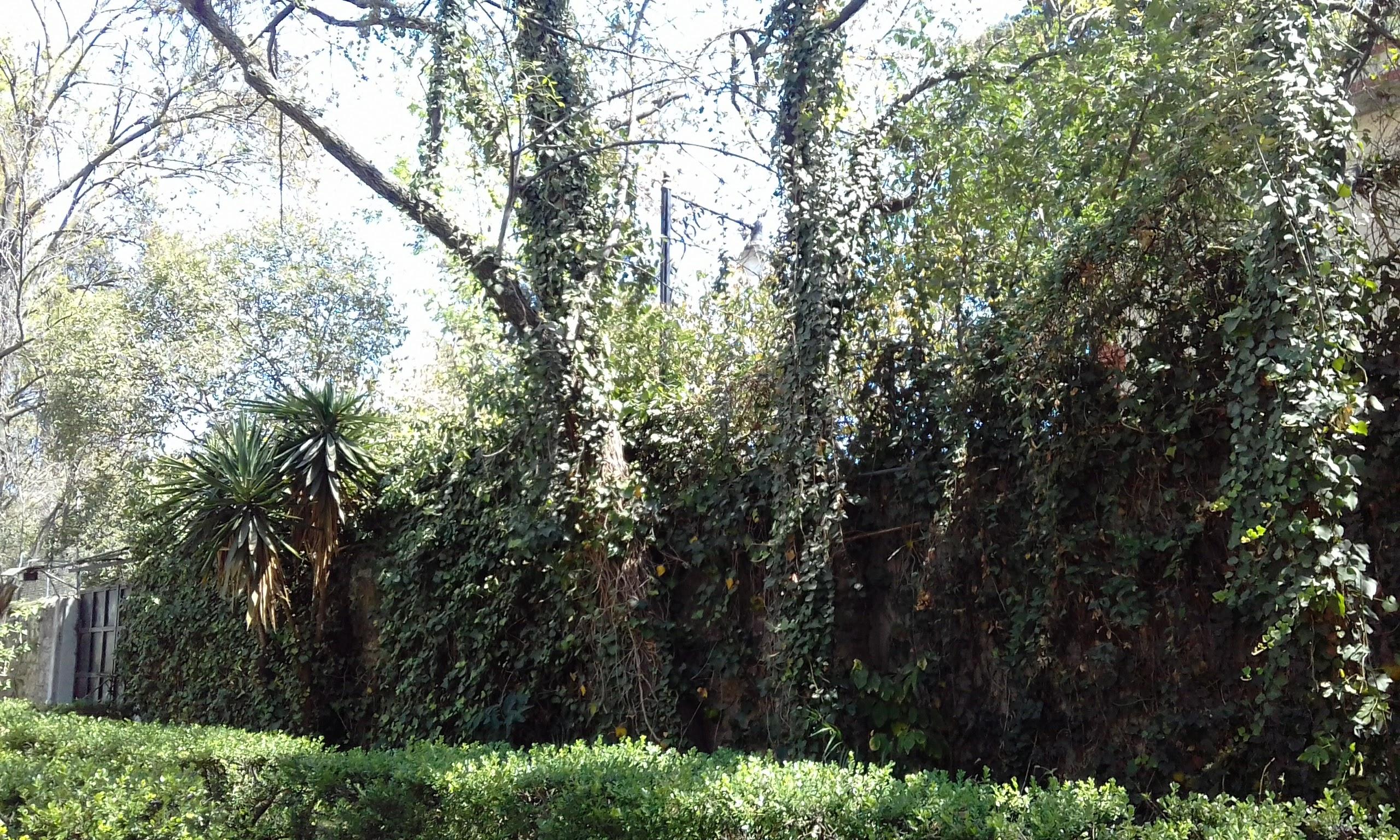 Jardín en Cruces